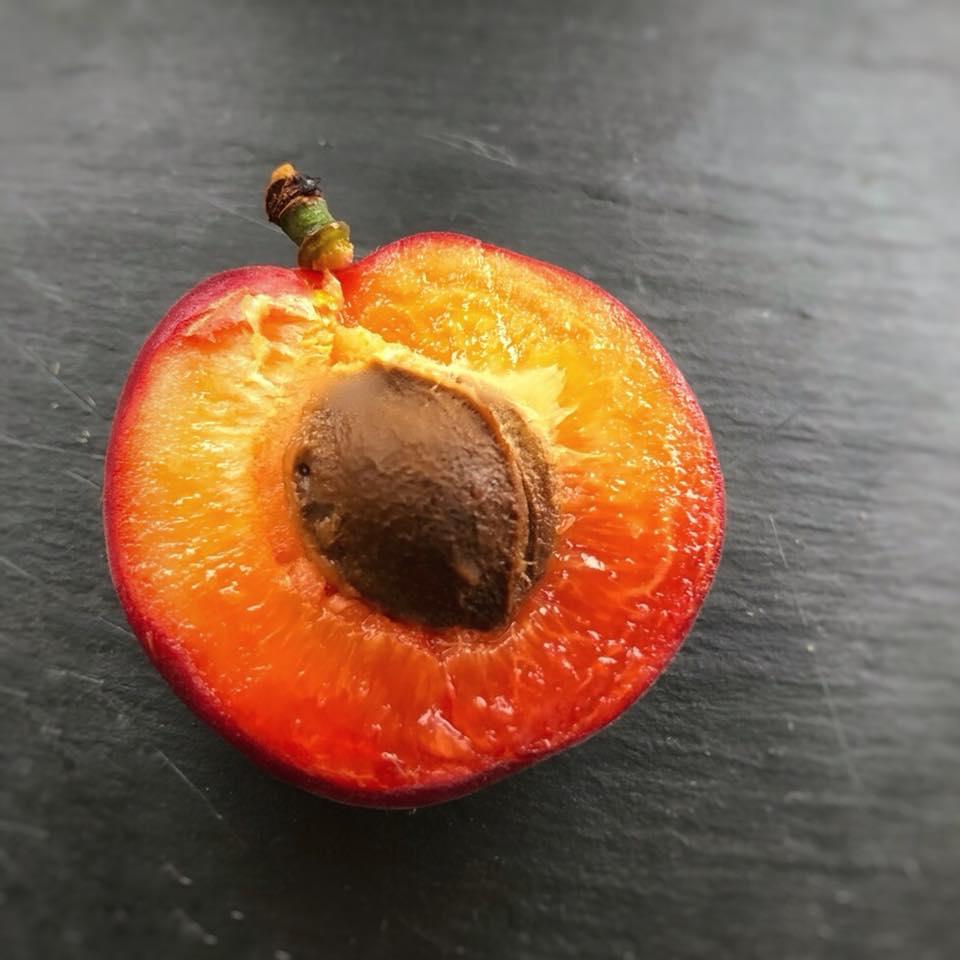 На Закарпатті з'явився перший врожай червоних абрикосів