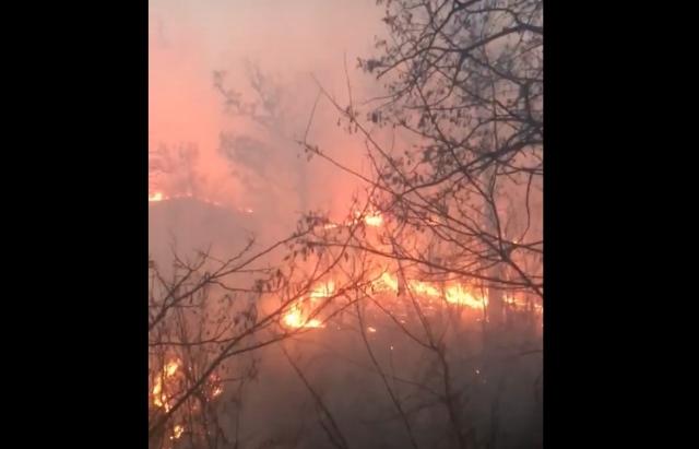 Вогонь навколо Мукачева: За добу пожежники фіксували 6 загорань трави (ФОТО, ВІДЕО)