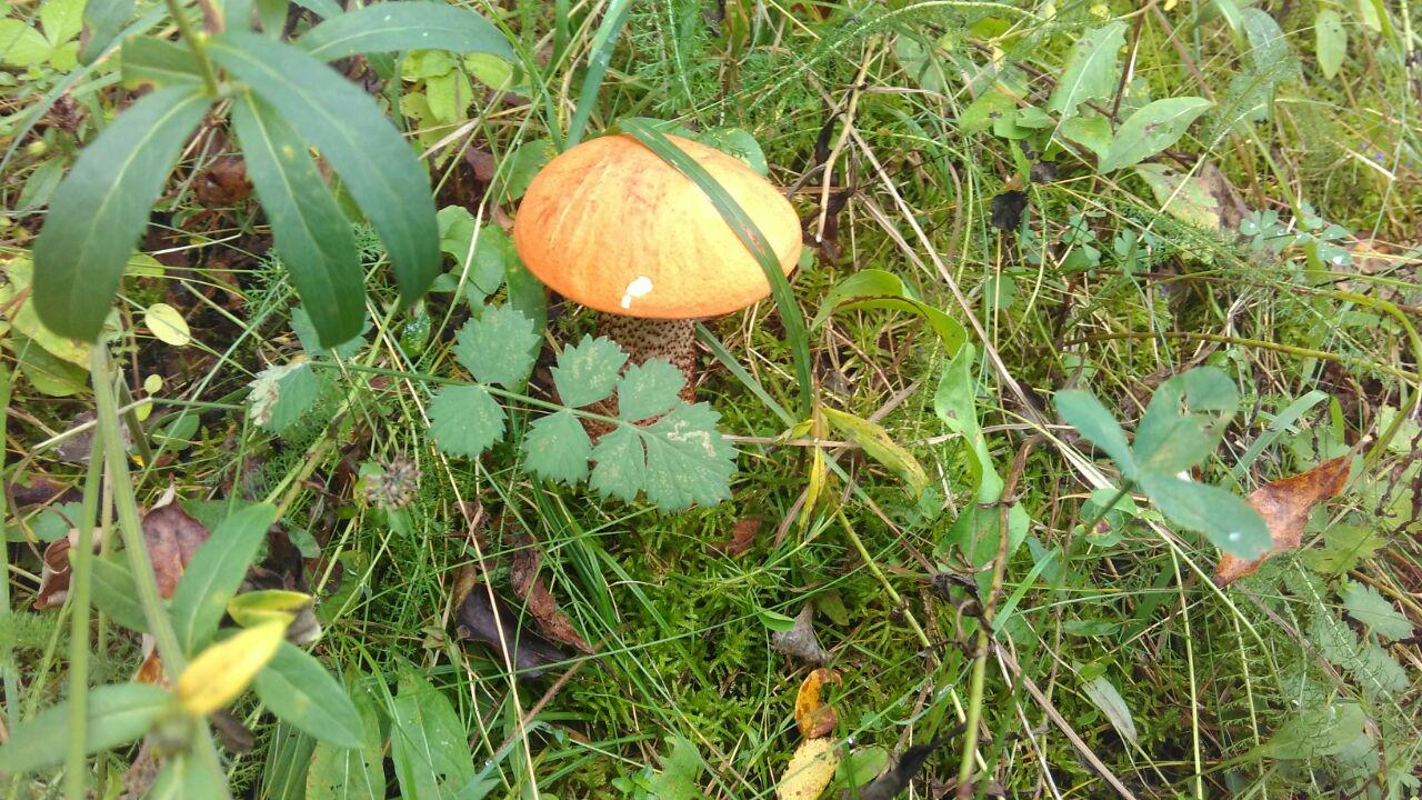 Усі на грибах: на Закарпатті стартувало осіннє тихе полювання (ФОТО)