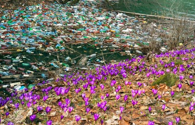 Страшне видовище: поряд з квітучими полями Колочави пливуть купи сміття