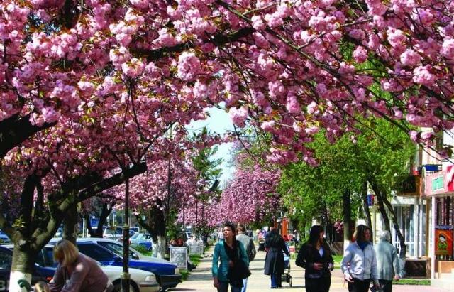 На період цвітіння сакур в Ужгороді та Мукачеві заброньовано до 96% готелів (ФОТО)