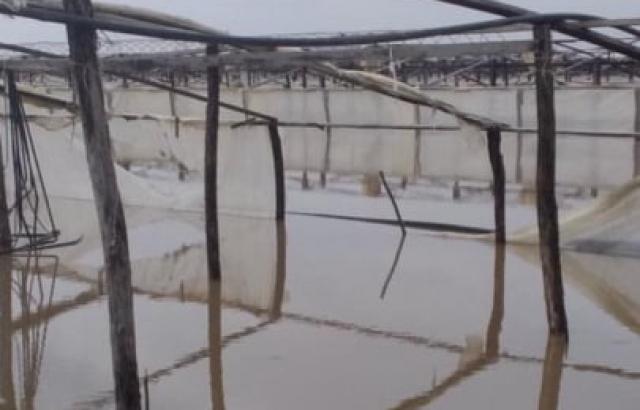 Затоплені дороги та поля: річки Закарпаття виходять з берегів (ФОТО, ВІДЕО)