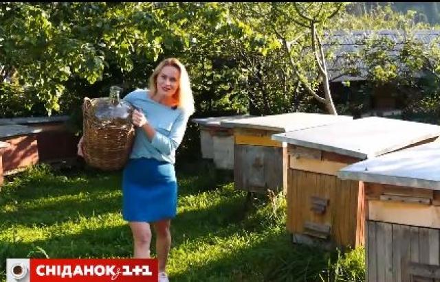1+1 продовжує вивчати Закарпаття: колочавські бджоли