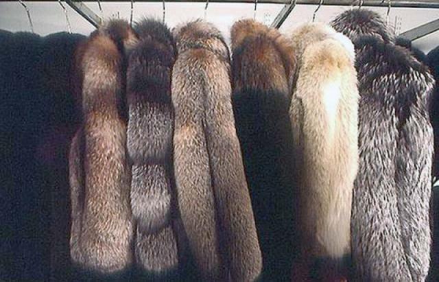 У Мукачеві за 3 хвилини винесли з магазину шуб на мільйон гривень