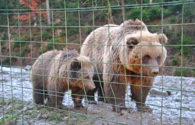 Як ведмеді реабілітаційного центру