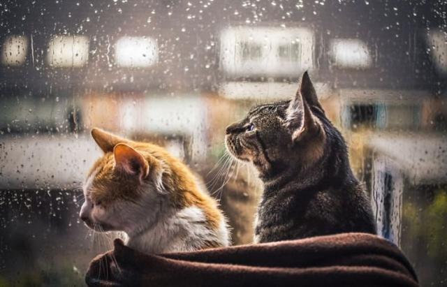Різдво закарпатці зустрінуть у хмарну та дощову погоду