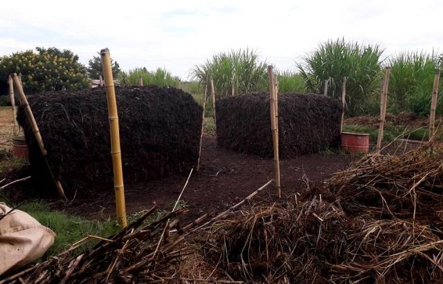 Закарпатка Наталка Заморина вирощує у центрі Африки ананаси та ставить рекорди (ФОТО)