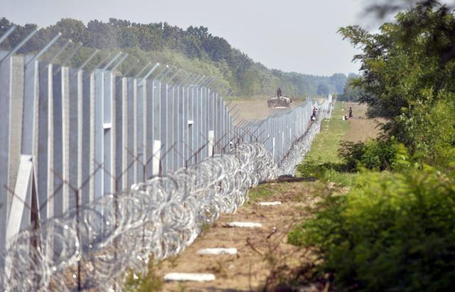 Угорщина передумала будувати паркан проти свиней на кордоні з Україною