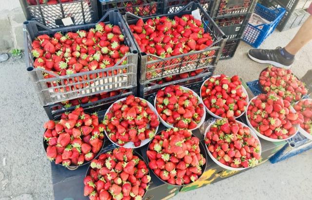 Сезон полуниці на Закарпатті – у розпалі: ціни йдуть вниз