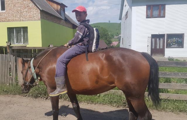 Курйоз дня: у селі Чорна Тиса школярі їздять у школу верхи на конях