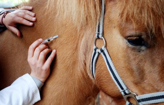 Господарю скаліченого коня на Рахівщині компенсують матеріальну шкоду