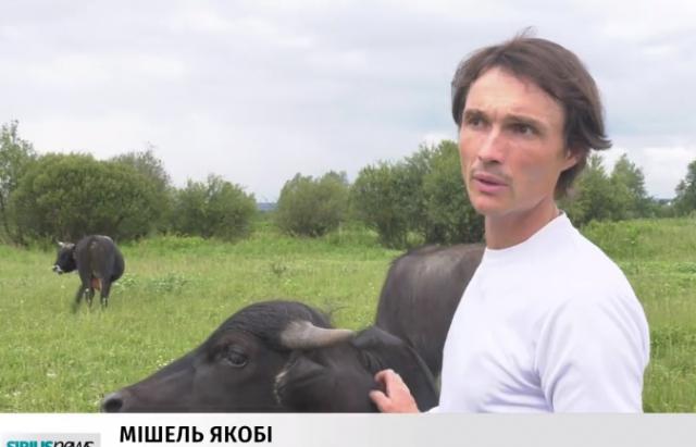 На Хустщині еколог з Німеччини рятує популяцію карпатських буйволів (ВІДЕО)