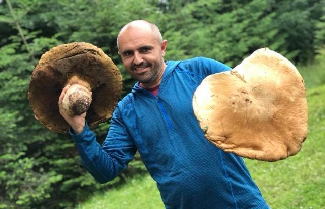 Ого! У Карпатах збирають велетенські гриби