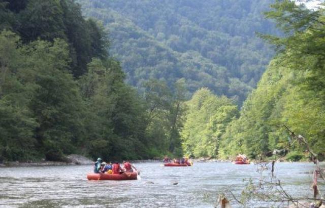 Як у кіно: 3 угорців, які сплавлялися Тисою, залізли на дерево, щоб не потонути