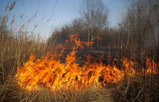 На Закарпатті оголосили надзвичайну пожежну небезпеку