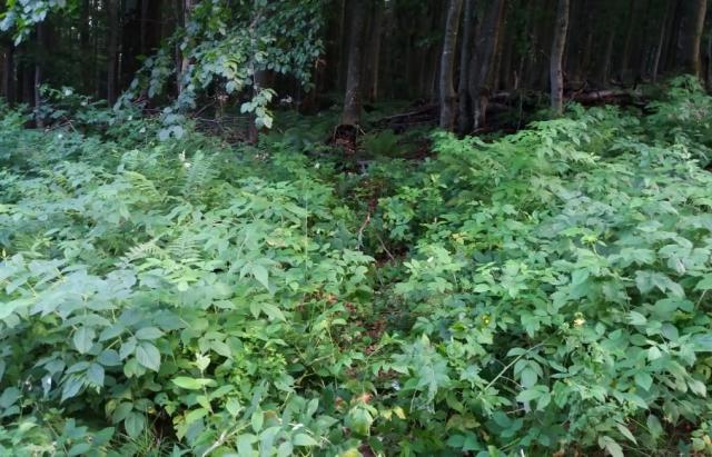 На українсько-словацькому кордоні спіймали 12 нелегалів (ФОТО)