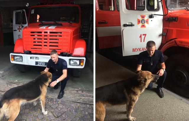 Пес-пожежник Баді працює в Мукачеві за сосиски