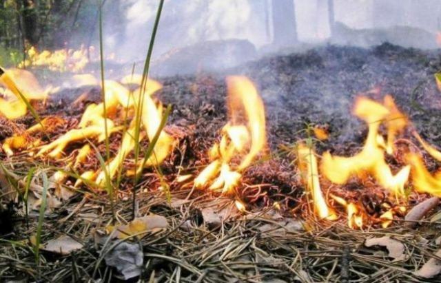 На Закарпатті оголошено 5-й клас пожежної небезпеки