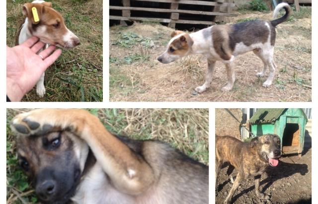 Візьми собаку з притулку: На Закарпатті стартував благородний флеш-моб (ФОТО)