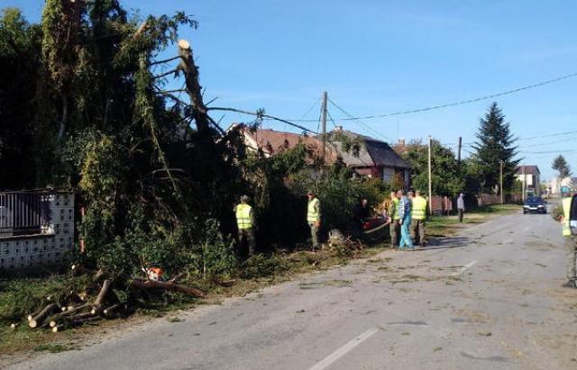 Неподалік Ужгорода пронеслось торнадо (ФОТО, ВІДЕО)