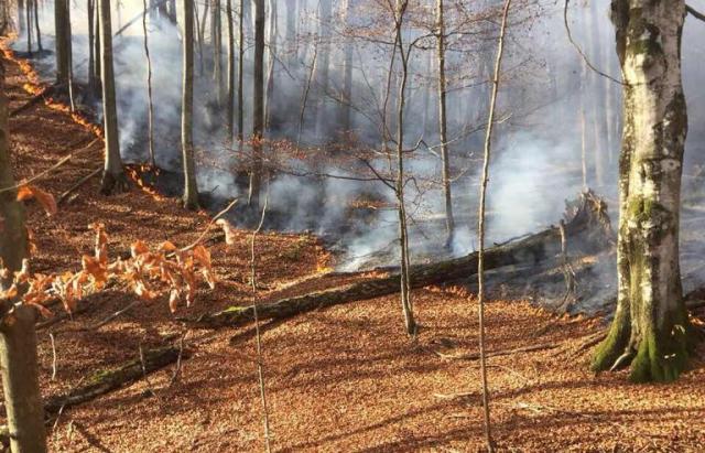 На Тячівщині горів ліс. Вогонь охопив 9 гектарів (ФОТО)