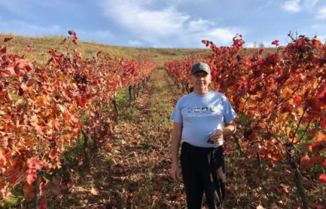 Тихе полювання на долині Чизай: як на Закарпатті збирають осінній врожай винограду (ФОТО)