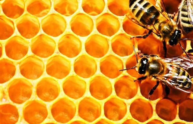З березня в Україні можна буде страхувати бджіл
