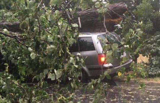 На Берегівщині дерево впало на авто посеред траси (ФОТО, ВІДЕО)