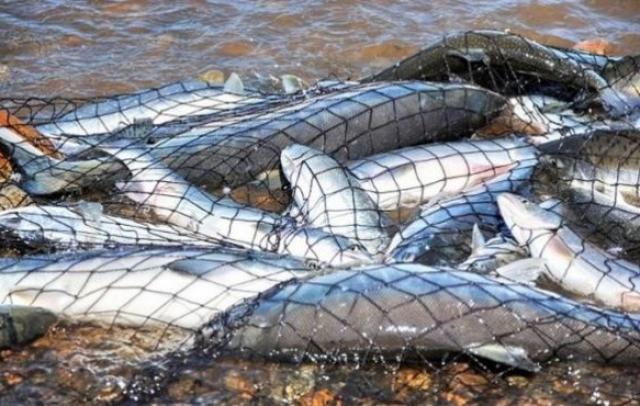 На Закарпатті до січня заборонили масовий вилов риби