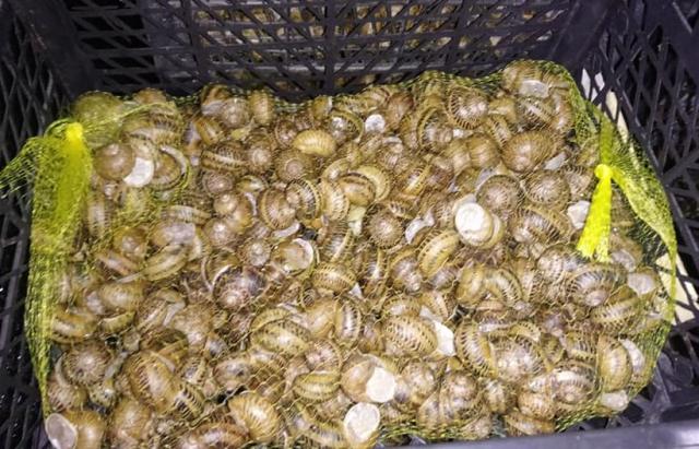 На Закарпатті почали збирати врожай равликів (ФОТОФАКТ)