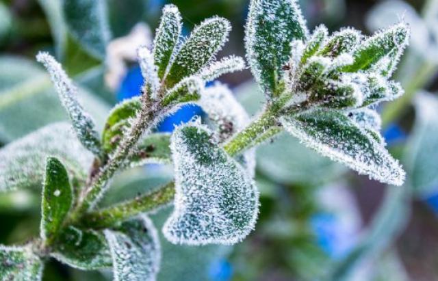 Одягайтесь тепліше: Рятувальники повідомили про заморозки на Закарпатті