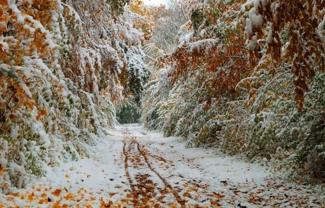 Фото дня: зустріч зими та осені на озері Синевир