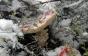 Завершення сезону: на Закарпатті гриби знаходять навіть під снігом (ФОТО)