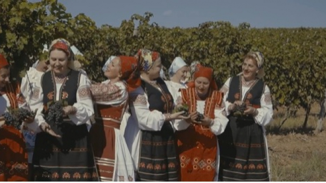 """""""Ой на горі винобрання"""": На Закарпатті створили музичний фільм про виготовлення вина"""