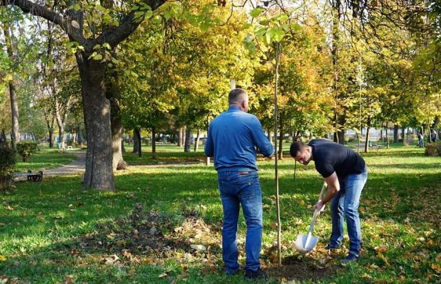 Зелений флеш-моб: Мукачівці висадили у місті кілька сотень дерев (ФОТО, ВІДЕО)