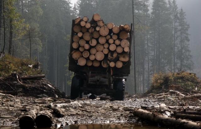 Верховна рада заборонила вирубки в Карпатах