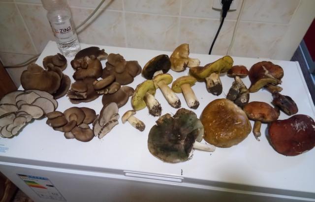 Закарпатці досі збирають гриби, вже у рукавичках (ФОТО)