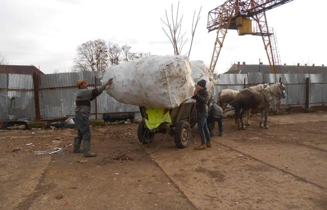 Цікава ініціатива: роми розчищають від пляшок найбруднішу річку Закарпаття (ФОТО)