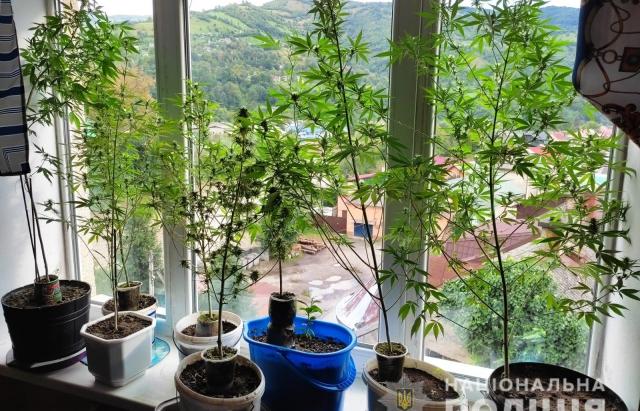 Закарпатець вирощував коноплі прямо на балконі (ФОТО)